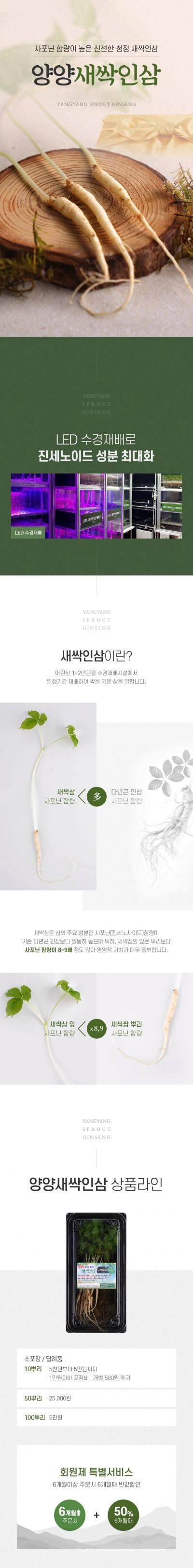 [T055]새싹인삼 상세페이지 제작+촬영